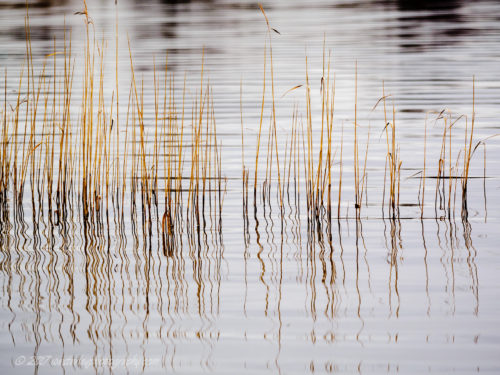 Westerley Photography  Reeds-at-Loch-Ard.